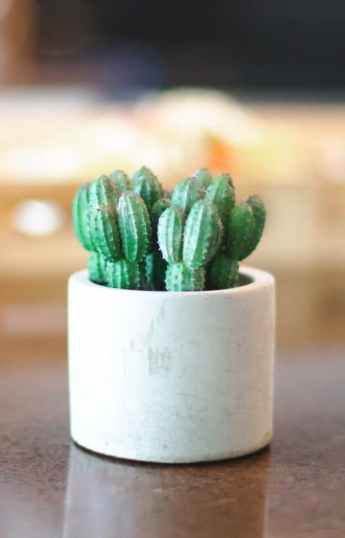 Pot avec cactus en plastique décoratif